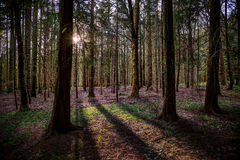 Sunlight and shadows in the woods Royalty Free Stock Photo