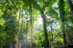 Sunlight shine through tree in tropical rainforest. At national park Stock Image