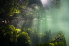 Sunlight Shines on Algae in Marine Lake. Sunlight shines through the surface and onto algae growing along the side of a marine lake in Raja Ampat, Indonesia Stock Photos