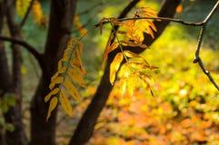 Sunlight shines through autumn leaves. Stock Photo