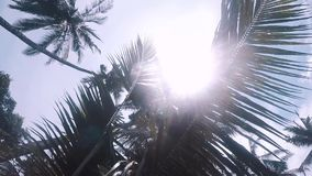 Sunlight shines through the branches of a palm tree in the jungle. Bali stock video footage