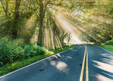 Sunlight Shines Through Fog on Country Road Stock Photo