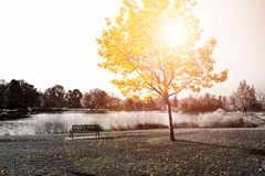 Free Sunlight Shines On Golden Yellow Tree And Park Bench Stock Photos - 108679583