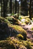 Sunlight shines onto some moss on the ground in a forest.  Stock Image