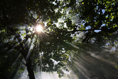 Sunlight shines through trees Stock Photos