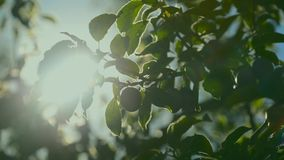 Sunlight shines through treetop branches stock video footage