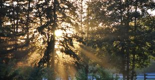 Sunlight shining through the forrest Royalty Free Stock Images