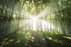Sunlight shining in green forest Royalty Free Stock Photography