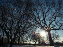 Sunlight Shining Through Tree Branches Stock Photography