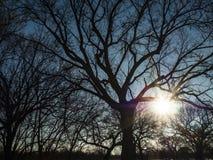 Sunlight Shining Through Tree Branches Stock Image