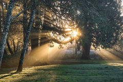 Sunlight shining through trees Stock Image