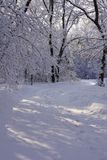 Sunlight Shining Through Trees covered with Hoarfrost along a Walking Trail royalty free stock images