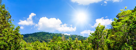 Sunlight shining in tropical jungle Royalty Free Stock Images