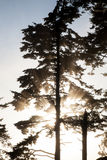 Sunlight Silhouetting Tree Royalty Free Stock Image