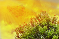 Sunlight sky with clouds and green trees Royalty Free Stock Photo