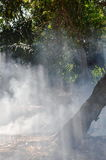 Sunlight through smoke from leaf burning in garden Royalty Free Stock Photos