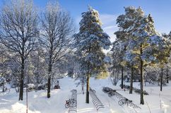 Sunlight on snowfilled pine trees outside in a snowscape with bike stand stock photography