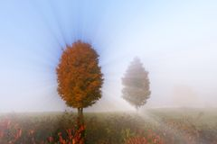 Sunlight streaking through foggy trees. Stock Images