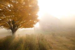 Sunlight streaking through foggy trees. Stock Photo