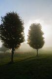 Sunlight streaking through foggy trees. Royalty Free Stock Image