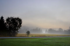 Sunlight streaking through foggy trees on an autumn morning Royalty Free Stock Photo