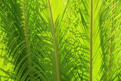 Sunlight streaming through healthy green ferns Stock Photo