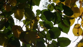 Sunlight streaming through the leaves stock video footage