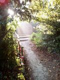 Sunlit pathway Royalty Free Stock Photography