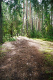 Sunlight streaming through the trees and falls onto a path Stock Photo