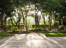 Sunlight streaming through the trees and shadows on the streets Royalty Free Stock Image