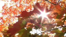 Sunlight streams through tree stock video footage