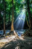 Sunlight streams through trees and a round spider web at Erawan national park with waterfalls in the background. Sunlight streams through the trees and a round royalty free stock images