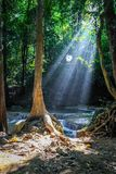 Sunlight streams through trees and a round spider web at Erawan national park with waterfalls in the background larger. Sunlight streams through the trees and a stock images