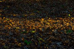 Sunlight strip on the dry autumn leaves Stock Images