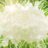 Sunlight ,summer  with fresh green leaves. Stock Images