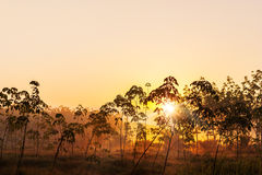 Sunlight and sun beam in the tree Stock Photography