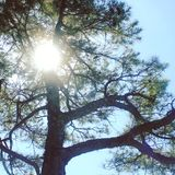 Sunlight. Sun through tree Stock Photography