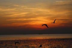 Background evening sky Stock Image