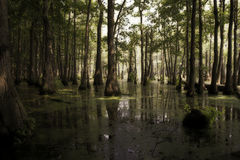 Sunlight in the Swamp stock photography