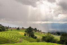 Sunlight  with terrace rice field Stock Photos