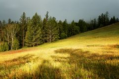 Sunlight after thunderstorm. On mountain meadow Stock Photo