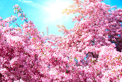 Sunlight and tree Royalty Free Stock Images