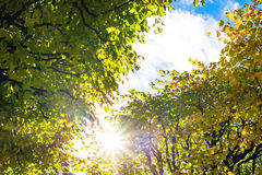 Sunlight between the tree branches Royalty Free Stock Photography