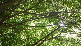 Sunlight into tree branches with leaves. Clip stock footage