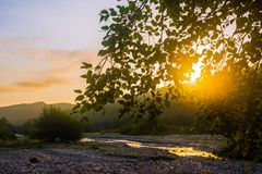Sunlight through tree branches Royalty Free Stock Image