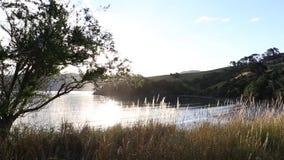 Sunlight through the tree stock video