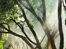 Sunlight through the tree. Stock Photography