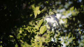 Sunlight through tree leaves. Jungle rainforest nature background