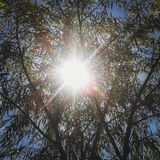 Sunlight and tree during summer. A nice picture of summertime stock image