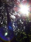 Sunlight through trees. Sun light in the forest Royalty Free Stock Images